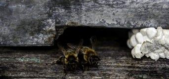 Bijen HDR Royalty-vrije Stock Afbeeldingen