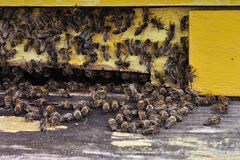Bijen in het bijenkorfclose-up Stock Afbeelding