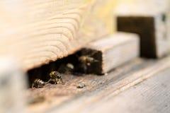 Bijen in het huis Stock Afbeeldingen