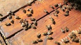 Bijen, mening van de het werk bijen op honingscellen stock footage