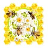 Bijen met bloemen Royalty-vrije Stock Foto