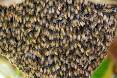 Bijen in nest Royalty-vrije Stock Afbeeldingen