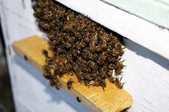Bijen op bijenkorf Royalty-vrije Stock Afbeelding