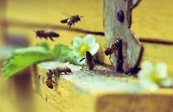 Bijen op bijenkorf Royalty-vrije Stock Afbeeldingen