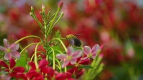 Bijen op bloemen in de tuin stock footage