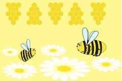 Bijen op de madeliefjes Stock Fotografie
