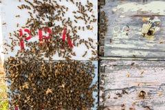 Bijen op een bijenkorf Royalty-vrije Stock Foto's
