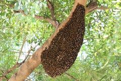 Bijen op een boom royalty-vrije stock foto