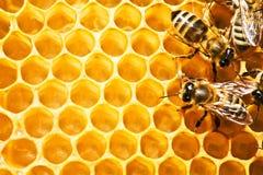 Bijen op honeycells Stock Foto's