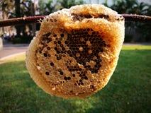 Bijen op Honingraat in stad Stock Foto