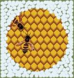 Bijen op honingraten. Stock Illustratie