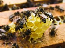 bijen op honingraten in de zomer Stock Foto's