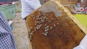 Bijen op kader in honingraat De zomertijd van de honingsoogst stock videobeelden