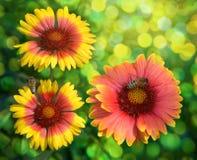 Bijen op kleur, die nectar verzamelen Royalty-vrije Stock Foto's