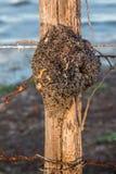 Bijen` s Nest in Amazonië Stock Foto's