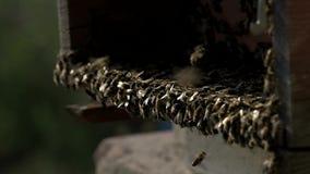 Bijen uit de bijenstal stock footage