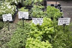 Bijenbalsem, Salie en Rosemary Herb Backgrounds royalty-vrije stock foto's