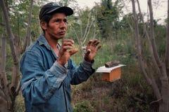 bijenbewaarder en de trotse eigenaar verklaren die van het koffielandbouwbedrijf hoe zijn bijenkorf aan temperatuurverandering re stock foto