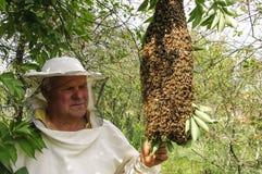 Bijenbewaarder met een zwerm van bijen royalty-vrije stock afbeelding
