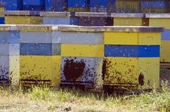 Bijenbijenkorf Stock Fotografie