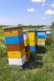 Bijenbijenkorf Stock Foto's