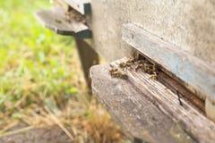 Bijenbijenkorf, bijenvlieg uit de bijenkorf, bijen stock afbeelding