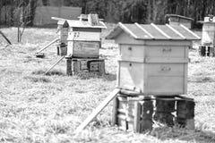 Bijenbijenkorf die zich op gebied bevinden Stock Foto's