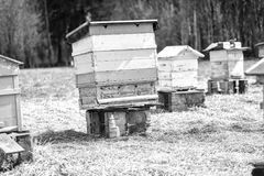 Bijenbijenkorf die zich op gebied bevinden Stock Foto