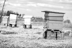 Bijenbijenkorf die zich op gebied bevinden Royalty-vrije Stock Foto