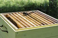 Bijenbijenkorf met bijen Royalty-vrije Stock Foto