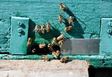 Bijenbijenkorf met bijen op het Royalty-vrije Stock Foto's