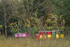 Bijenbijenkorf op een gebied Stock Afbeeldingen