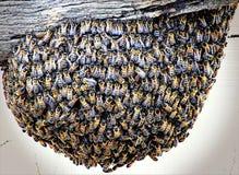 Bijenbijenkorf op een Omheining Post royalty-vrije stock fotografie