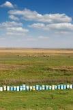 Bijenbijenkorf op gebied Royalty-vrije Stock Fotografie