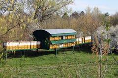 Bijenbijenkorf op gebied Stock Afbeeldingen