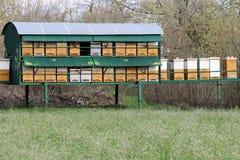 Bijenbijenkorf op weide Stock Foto's