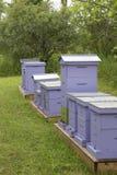 Bijenbijenkorven Royalty-vrije Stock Afbeeldingen