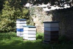Bijenbijenkorven royalty-vrije stock foto's