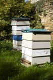Bijenbijenkorven royalty-vrije stock afbeelding
