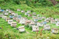 Bijenbijenkorven in de bijenstal in de zomer horizontaal Royalty-vrije Stock Foto's