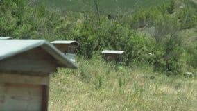 Bijenbijenkorven op een berg stock video