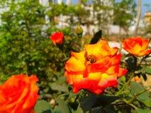 Bijenbloemen stock fotografie