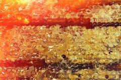 Bijenhoningraat met honing Stock Fotografie