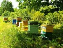 Bijenhuizen op groen gebied Royalty-vrije Stock Afbeeldingen