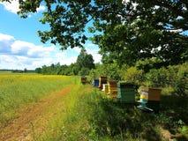 Bijenhuizen op groen gebied Stock Foto's