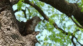 Bijenkorf in boomboomstam - deel 6 stock videobeelden
