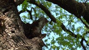 Bijenkorf in boomboomstam - Langzame Motie stock videobeelden