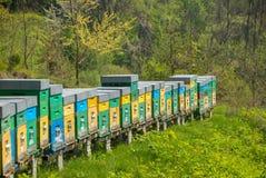 Bijenkorf in een weide Royalty-vrije Stock Foto's