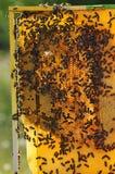 Bijenkorf en bij Royalty-vrije Stock Afbeeldingen