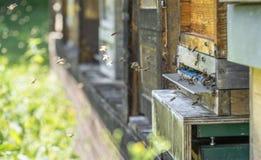 Bijenkorf en bijen stock foto